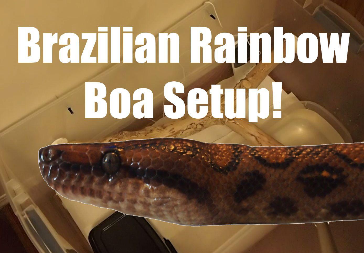 Brazilian Rainbow Boa Cage Setup