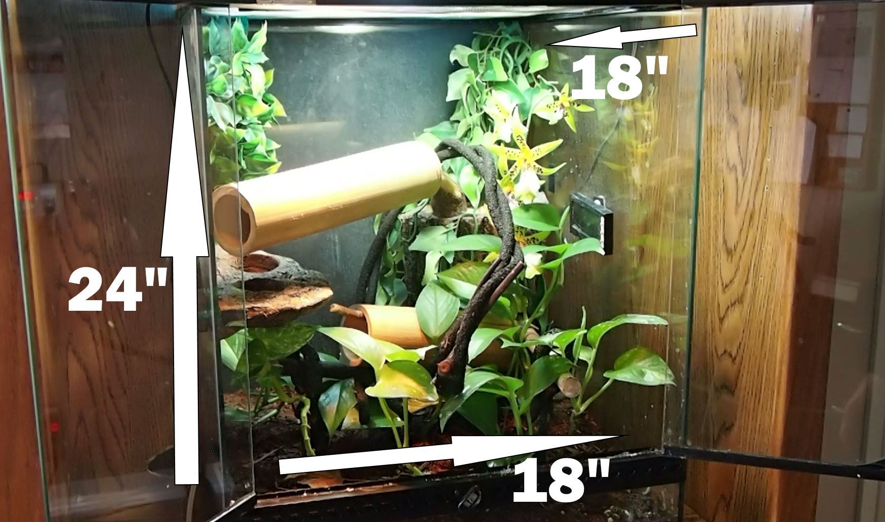 Terrarium Size for adult Day Gecko Care
