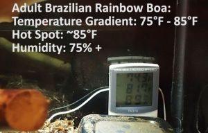 Brazilian Rainbow Boa Enclosure