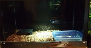 Cypress mulch and EcoEarth substrate for Brazilian rainbow boa enclosure