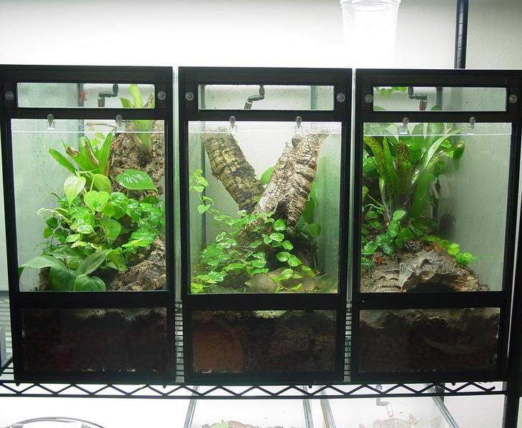 Crested Gecko Cage: Here are 3 Awesome Options!