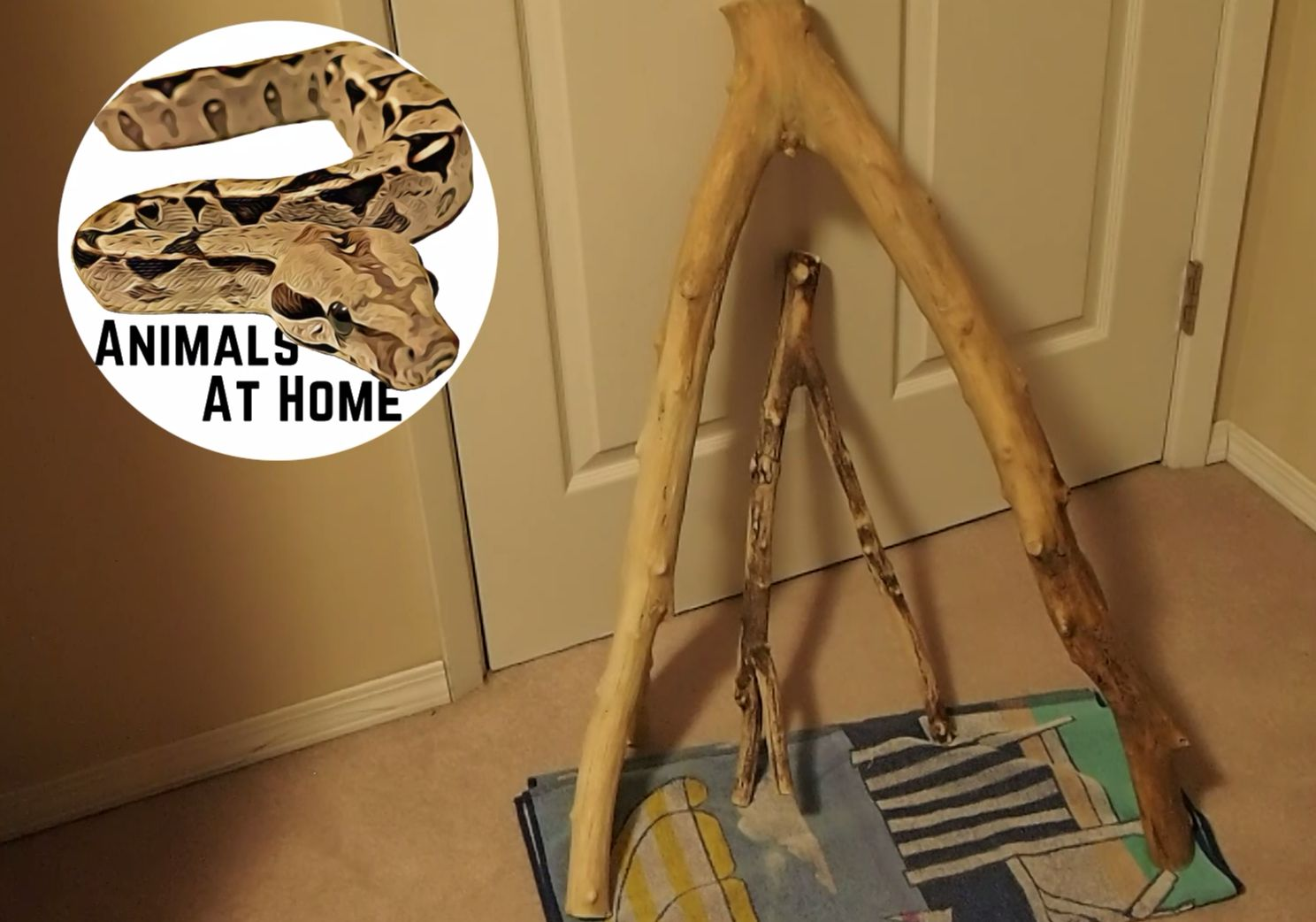 How to Sterilize Wood for Reptiles (Video)- Animals at Home