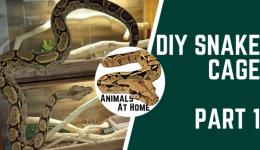 DIY Snake Cage: Part 1