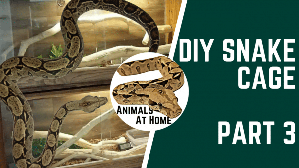 Best Substrate for Ball Pythons- 5 Options, 1 to Avoid