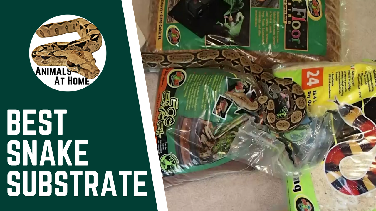 Best Ball Python Substrate