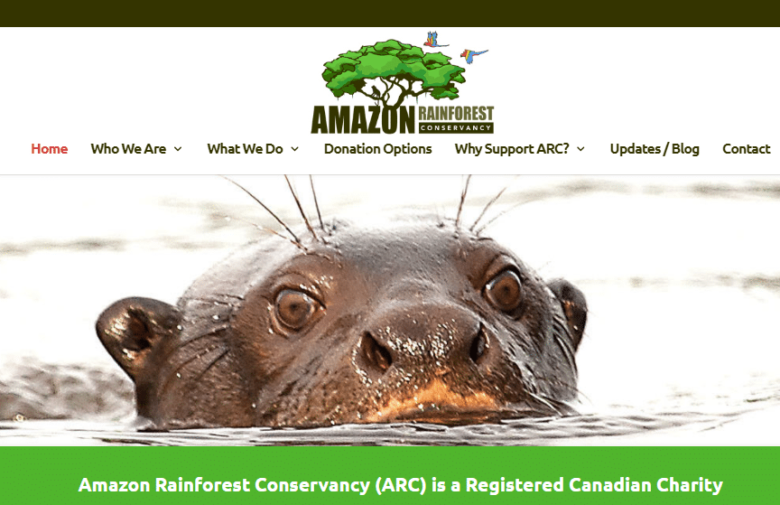 Save the Rainforest!