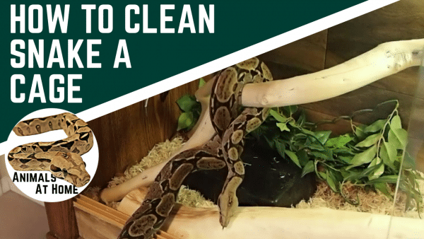 How to Clean a Snake Enclosure