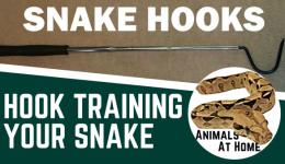 How to Train a Snake Not to Bite- A Simple, Effective Technique