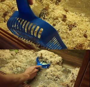 How to clean snake tank with kitty litter scoop