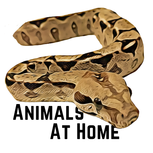 Best Thermostat for Reptiles- 4 Great Options and 1 to Avoid!