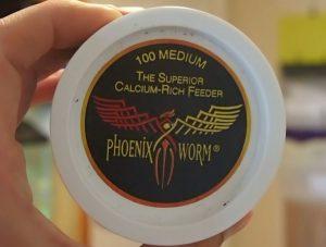 Phoenix worm's
