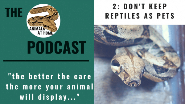 2: Don't keep reptiles as pets