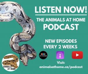 animal podcast