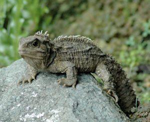 7: Dr. Reptilia | Jen Moore