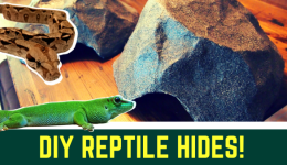DIY Snake Hide: How to Guide (video)