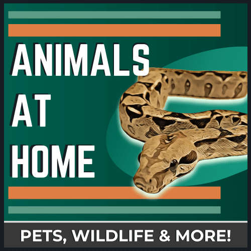 Reptile Podcast | The Animals at Home Podcast
